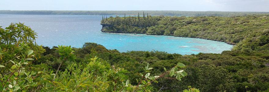 Biodiversité Terrestre